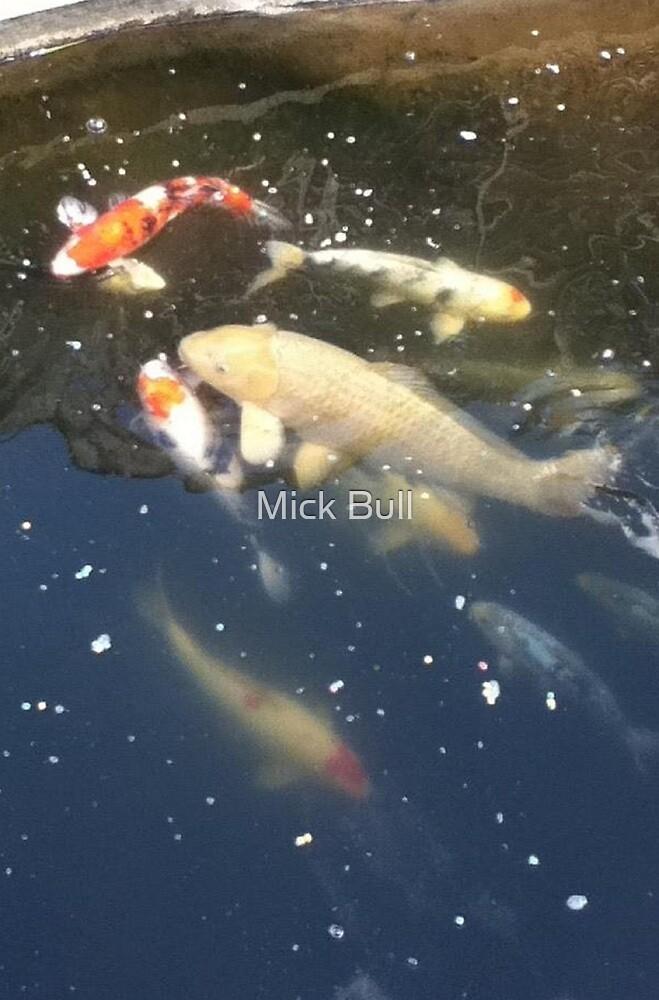 A Koi gathering by Mick Bull