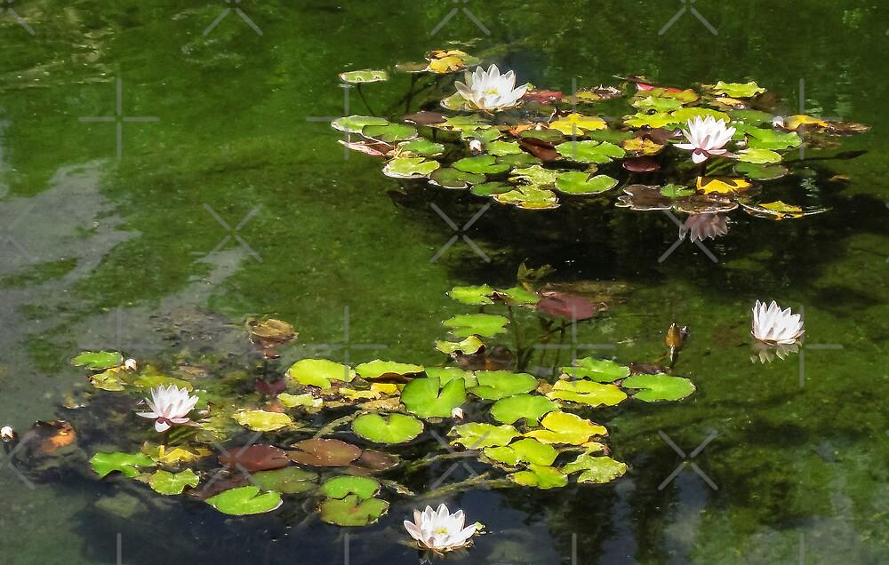 Pond by Heather Friedman