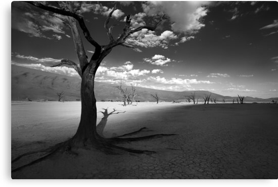 The Unforgiving Desert by Jill Fisher