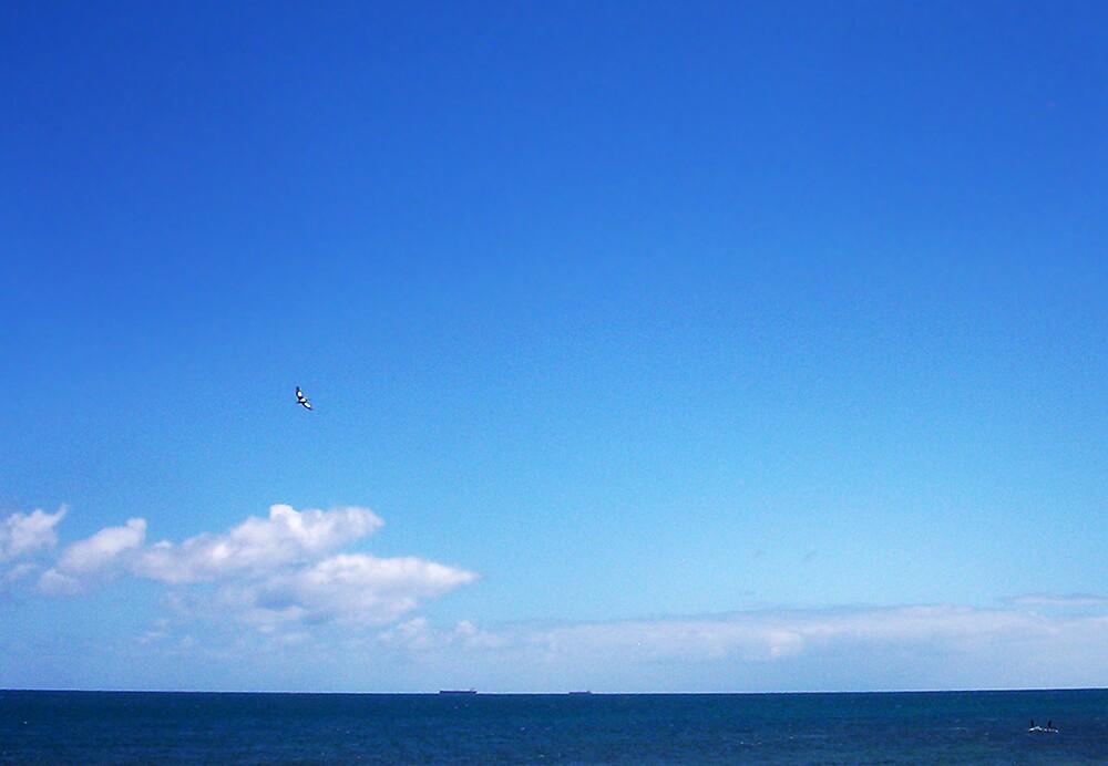 Captain Pelican In An Australian Blue Sky by Robert Phillips