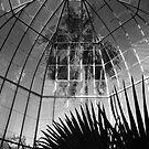 Palm House by reflexio