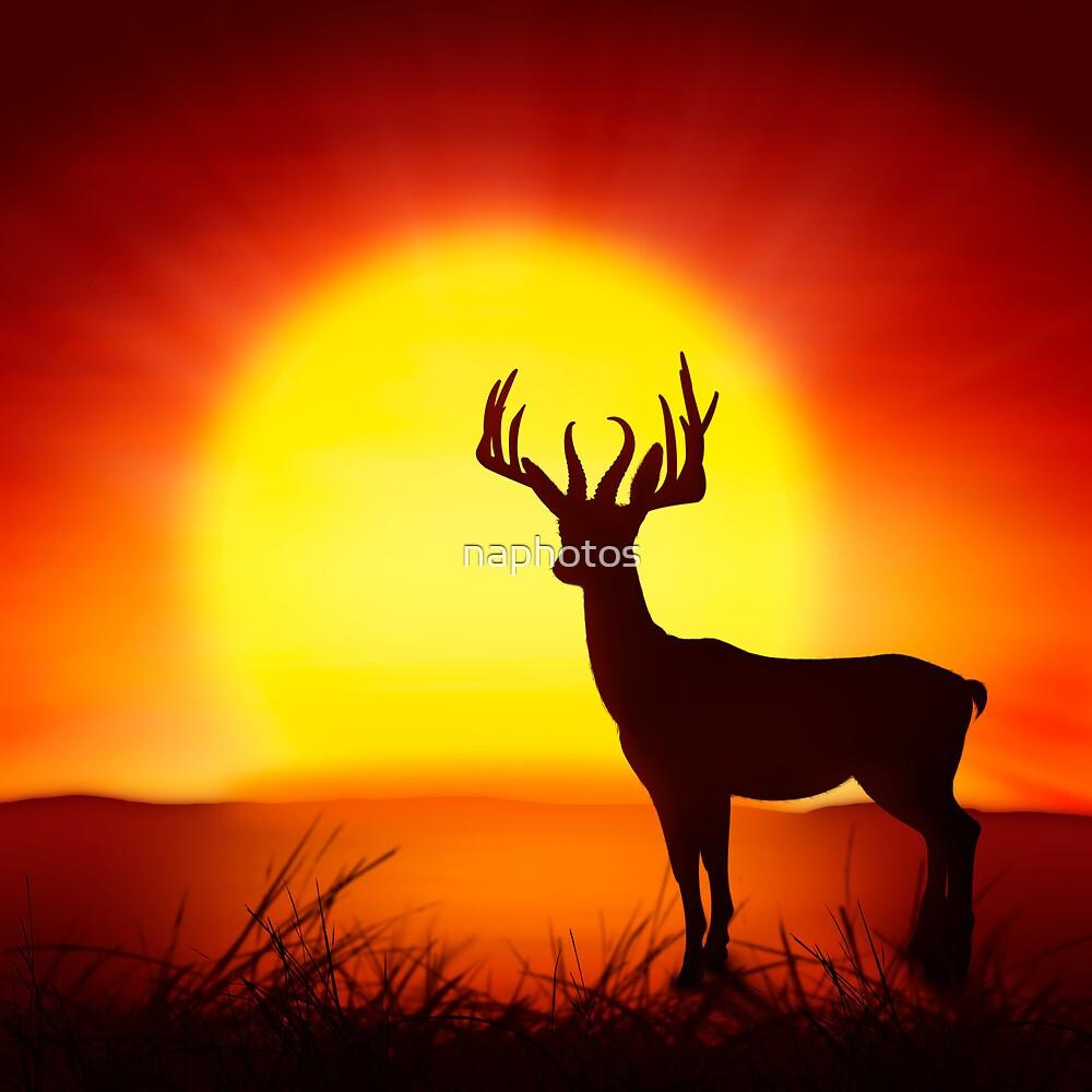 deer by naphotos