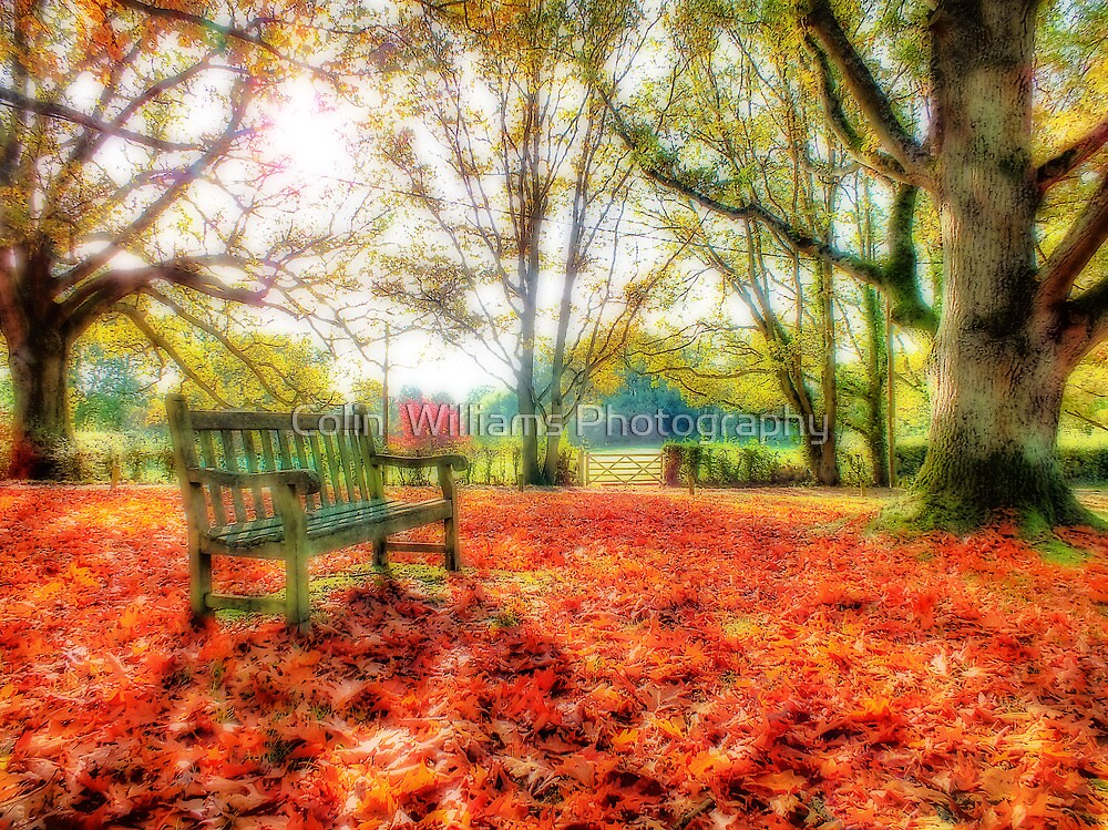 Bench Among The Leaves - Thatcham - Orton by Colin  Williams Photography