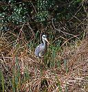 Heron by Nigel Bangert