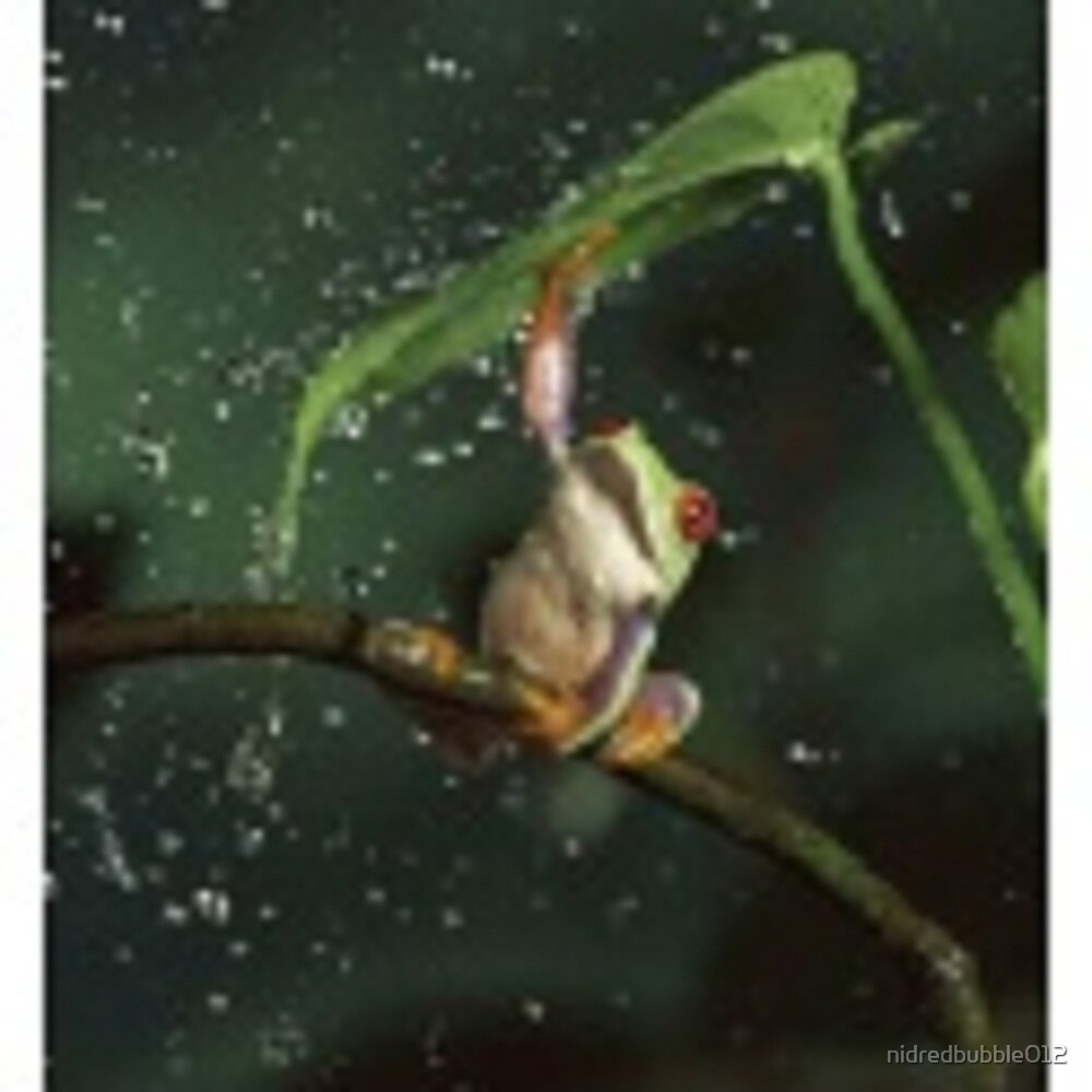 Red Eyed Tree Frog by nidredbubble012