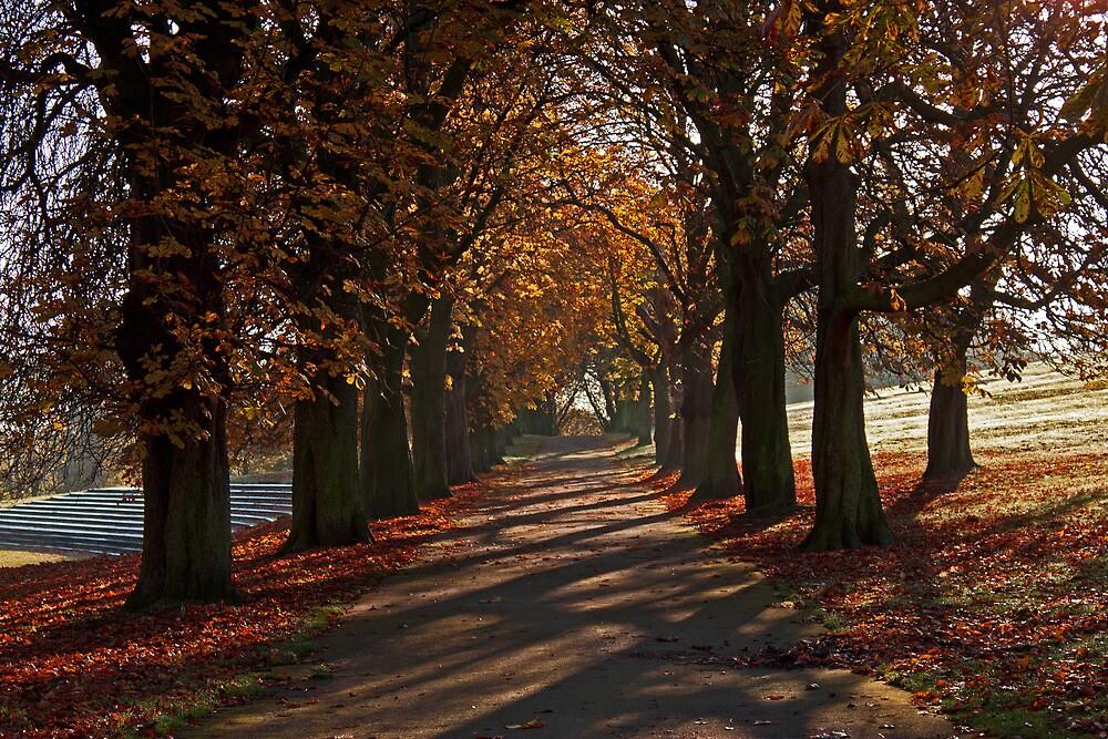 Thornes Park in Autumn by Dave Evans