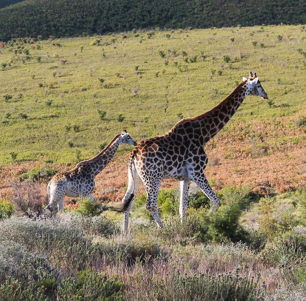Giraffe by IngridSonja