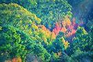 Autumn in the Hills    (PC) by Raymond Warren