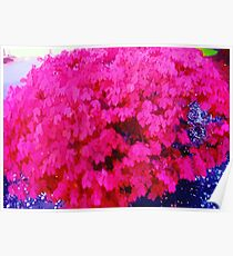 Watercolor Fuschia bush Poster