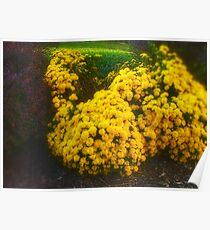 Yellow flowered bush Poster