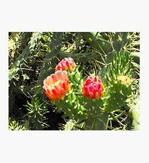 Greek cactus Photographic Print