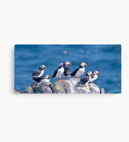 Puffins ~ Isle of May Canvas Print