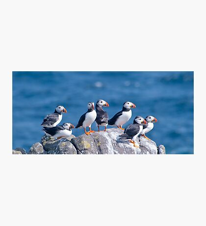 Puffins ~ Isle of May Photographic Print