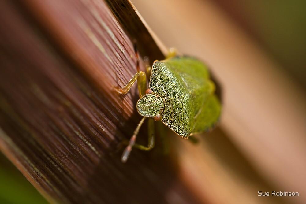 Green Shield Bug on leaf by Sue Robinson