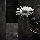 Through The Fence  by JerryCordeiro