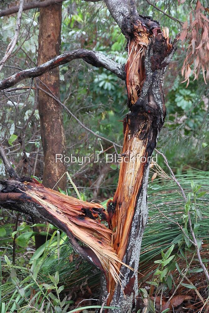 Aussie Bush Sticks: Wild Storm Last Night by aussiebushstick
