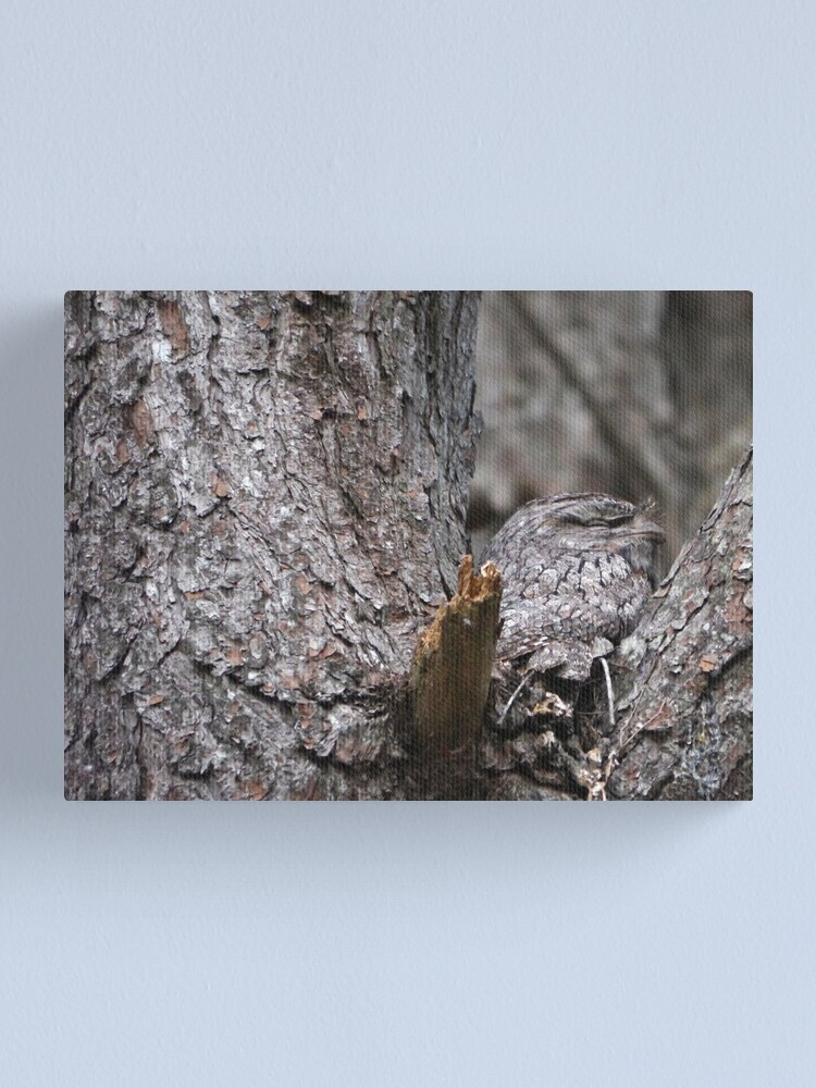 Alternate view of Tawny Frogmouth Nesting Canvas Print