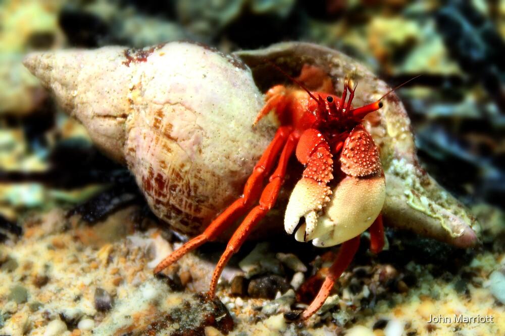 Hermit Crab by John Marriott