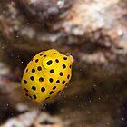 Yellow Box Fish, Nelson Bay, Australia by Emma M Birdsey