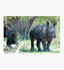 WILL HE MAKE ADULTHOOD - WHITE RHINOCEROS -  Ceratotherium simum - WIT RENOSTER Photographic Print