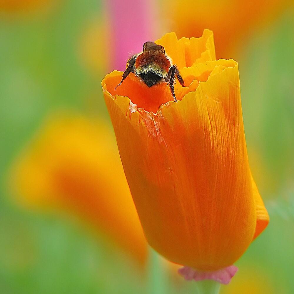 Beehind by John Poon