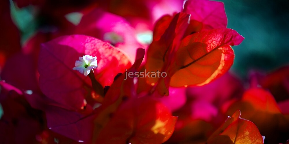 Spring in Noosa Two by jesskato