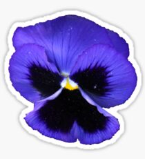 Pansy Sticker