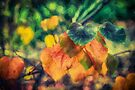Autumn Leaves        (ED) by Ray Warren