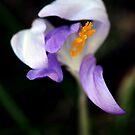 Spring Stretch by milkayphoto