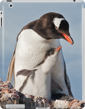 Flying Gentoo Chick iPad Case by Krys Bailey