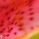 Slice of Summer by milkayphoto