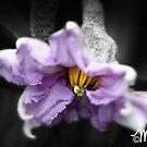 Thumbelina by milkayphoto
