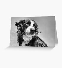 Dog in black & white Greeting Card