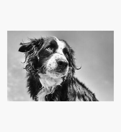 Dog in black & white Photographic Print