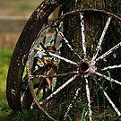 Wagon Wheels by Samantha Dean