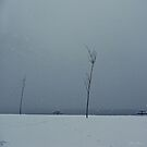Winter Kills by RobertCharles