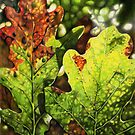 Autumn Oak Leaves by Deborah Holman