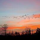 In Flight by Nick Boren