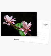 Cactus Flowers & Berry Leaves! Postcards
