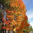 Fall ~ Northern California by Patty Boyte