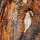 Timber Eye Wall Art by HoskingInd