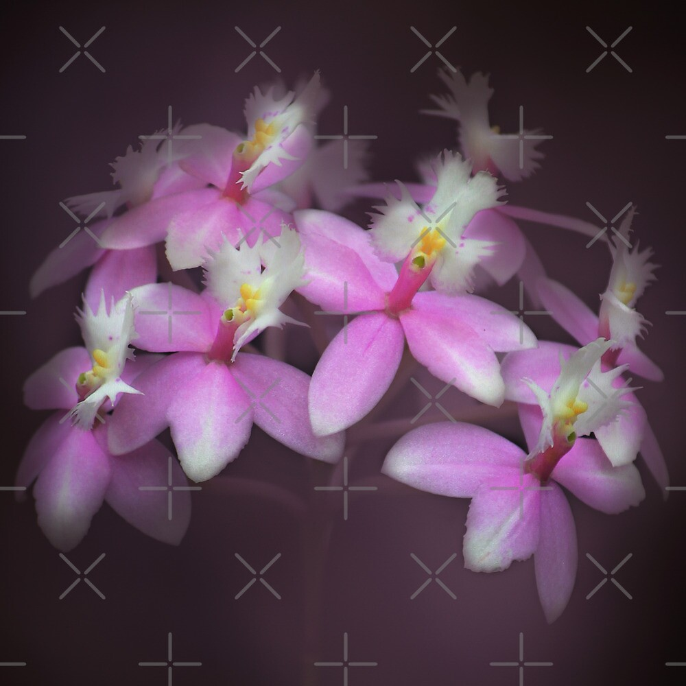 Dancing orchids by EbyArts