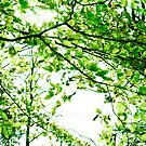 Green Leaves by BlinkImages