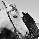 Black & White  by Jessica Britton