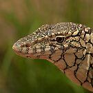 Australia Zoo - Lace Monitor  by Sea-Change