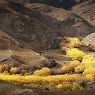 Pretty Valley by Robert Dettman