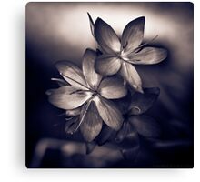 Even in a black and white world, colour can speak volumes Canvas Print