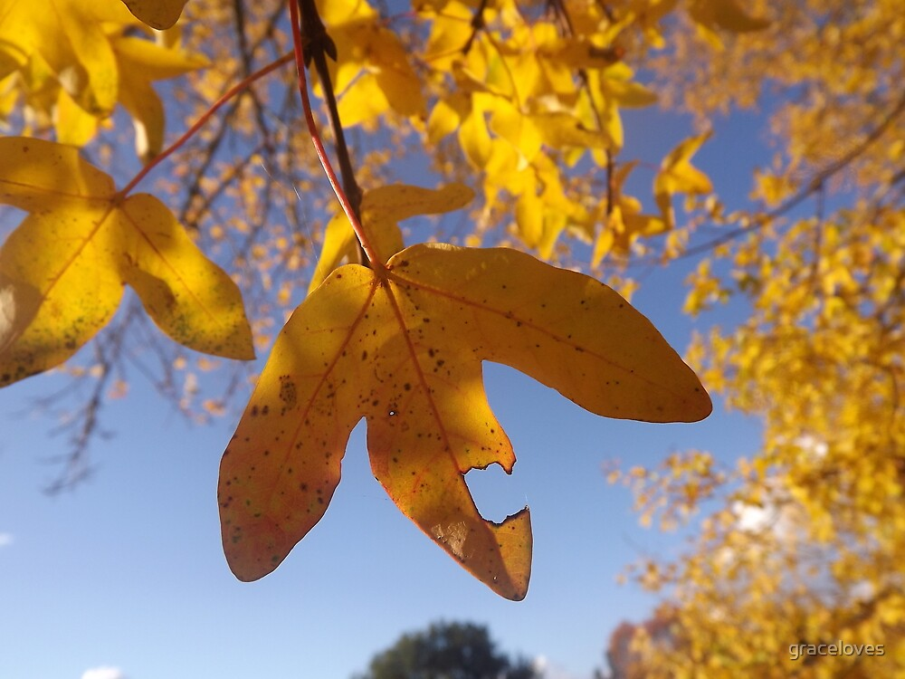Autumn leaves by graceloves