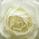 Vintage White Rose iPhone / iPod Case by Astrid Ewing Photography