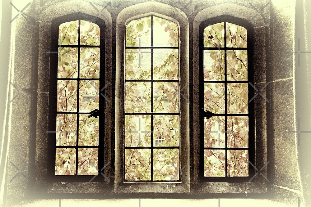 Looking through the Window by Catherine Hamilton-Veal  ©